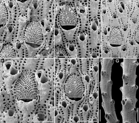 The picture shows the seven species of bryozoans that were used in the debunking.